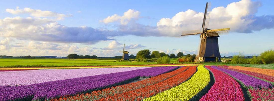 Campo holandés