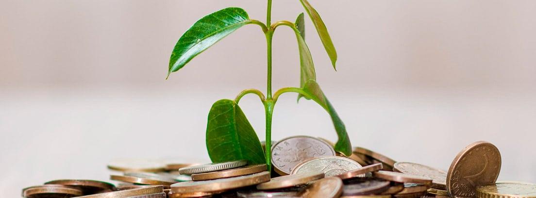 Planta brotando de unas monedas