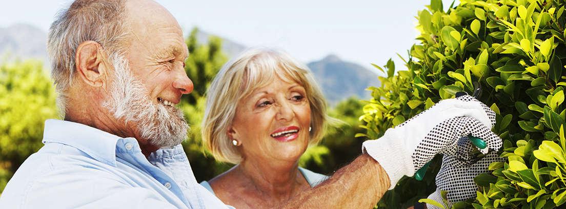 Contratar un plan de pensiones
