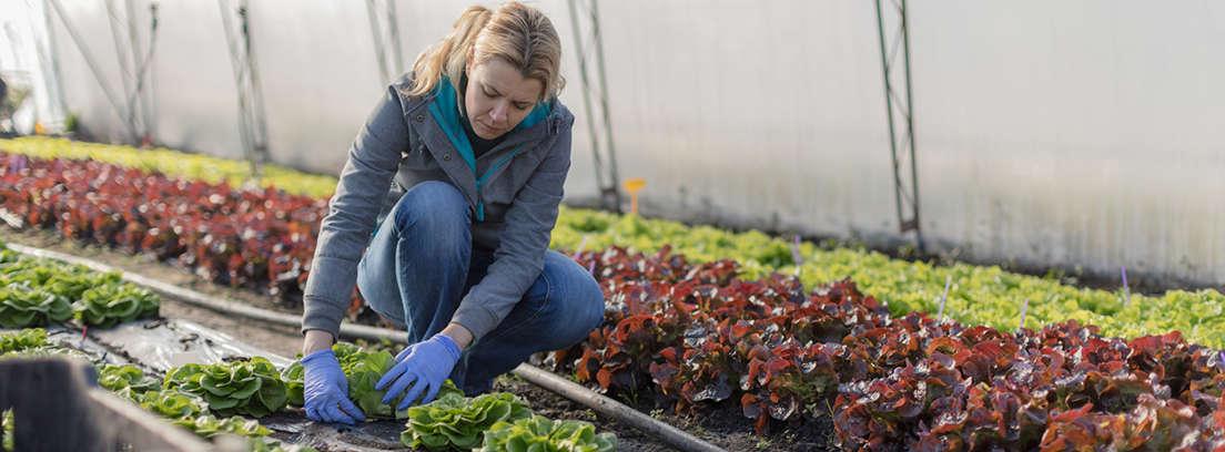 Mujer trabajando en un huerto