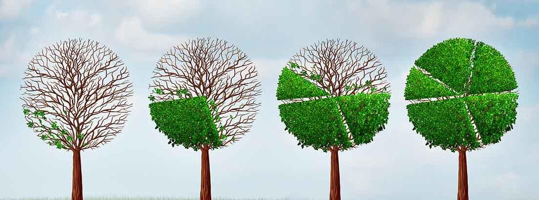 Cuatro árboles en línea con particiones en sus copas verdes
