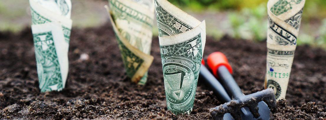 Billetes enrollados plantados en la tierra