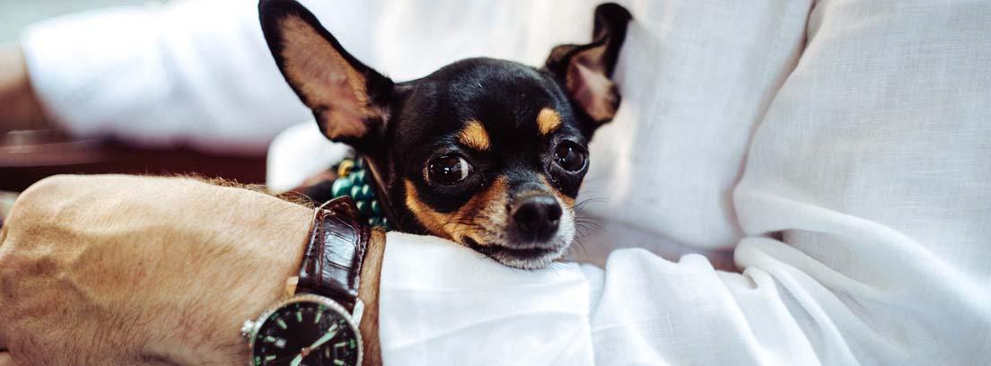 hombre vestido de traje con un perro en su regazo