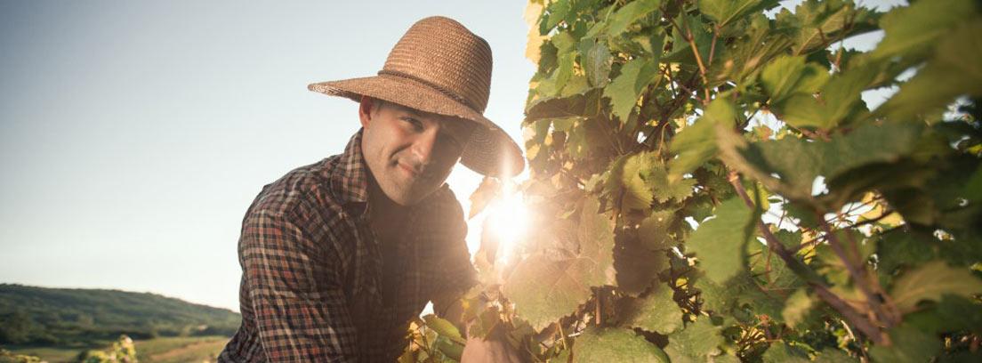 Hombre con sombrero y gesto sonriente tocando las hojas de una parra