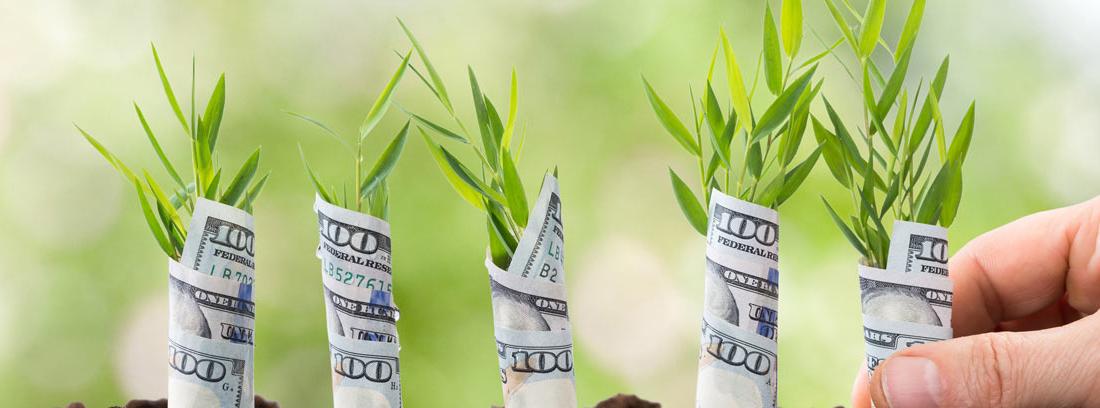 Billetes enrollados plantados en la tierra con brotes verdes saliendo de cada uno de ellos y una mano sujetando uno