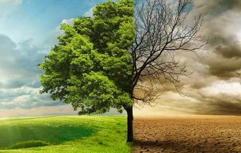 Fotografía que muestra un paisaje con una mitad verde y la otra, seca, como metáfora del cambio climático